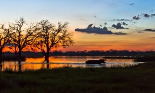 Zdjęcie BOTSWANA / Okavango Delta / Khwai River / Hipo na zachod slonca
