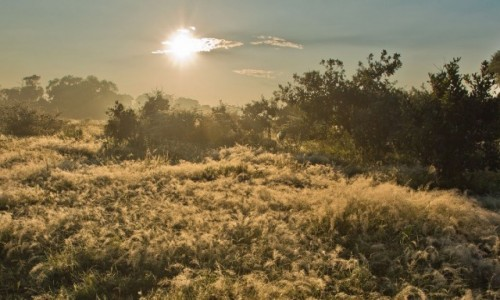 BOTSWANA / Okavango Delta / Savute / Świt w Savute
