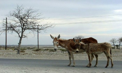 Zdjęcie BOTSWANA / W pobliżu Kalahari / Botswana / *