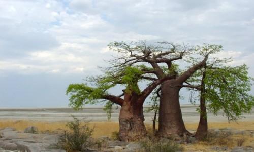 Zdjecie BOTSWANA / Pustynia Kalahari / Botswana / Na Makgadikgadi