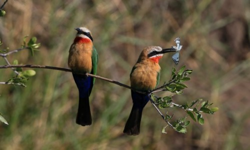 Zdjecie BOTSWANA / Delta Okawango / Delta Okawango / Śniadanie w Botswanie