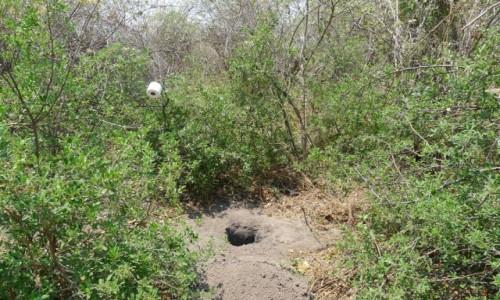 Zdjęcie BOTSWANA / Północna Botswana  / Delta Okawango / Toaleta na Okawango