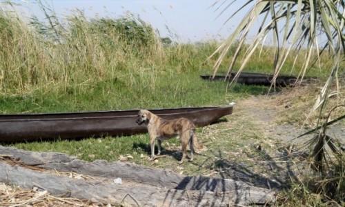 Zdjęcie BOTSWANA / Północna Botswana  / Delta Okawango/ miejsce przeprawy  / Azorek na Okawango