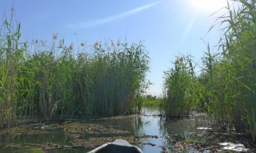 Zdjęcie BOTSWANA / Północna Botswana  / Delta Okawango/ na łodzi  / Wśród szuwarów