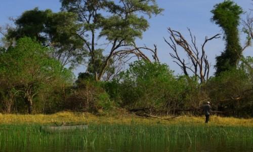 Zdjęcie BOTSWANA / Północna Botswana  / Delta Okawango / W poszukiwaniu drewna na ognisko