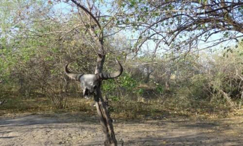 Zdjęcie BOTSWANA / Północna Botswana  / Delta Okawango / Dalej lepiej nie iść