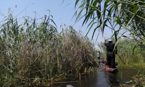 Zdjęcie BOTSWANA / Północna Botswana  / Delta Okawango/ na łodzi w  / Między nami szuwarami