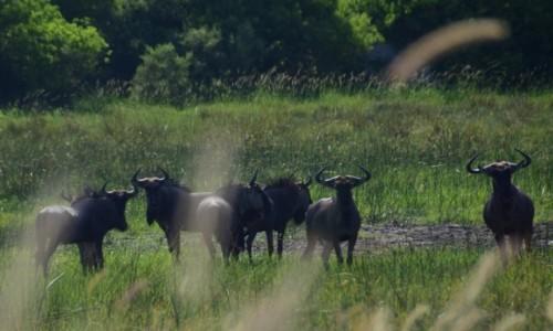 Zdjecie BOTSWANA / Płn. Botswana / Delta Okavango / Zaciekawienie