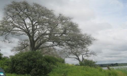 Zdjecie BOTSWANA / Botswana / Botswana / Botswana