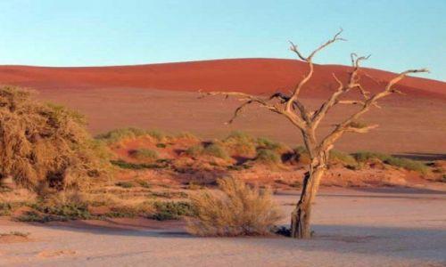 Zdjecie BOTSWANA / Pustynia Kalahari / Kalahari / Pustynia Kalaha
