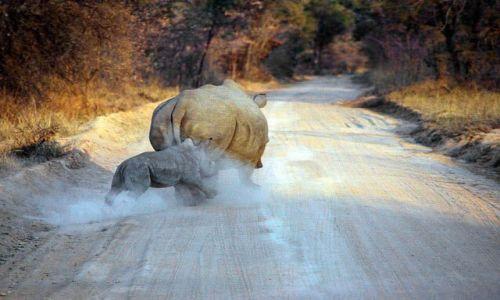 Zdjecie BOTSWANA / brak / MILD OF THE ROAD / WSPOMNIENIE Z SAFARI