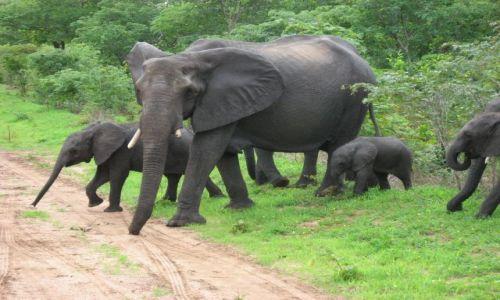 Zdjecie BOTSWANA / północno-wschodni / Chobe National Park / Bliskie spotkania III stopnia