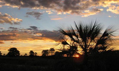 Zdjęcie BOTSWANA / Okawango / Audi Camp / Pod niebem pełnym cudów....