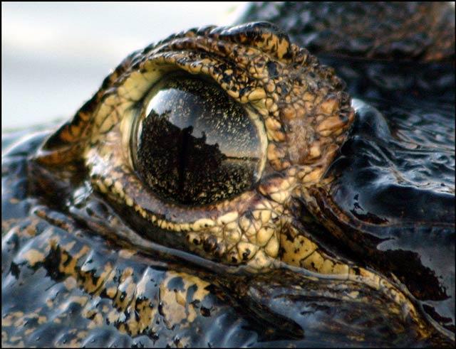 Zdjęcia: Pantanal, Panatanal, autoportret w oku :-), BRAZYLIA