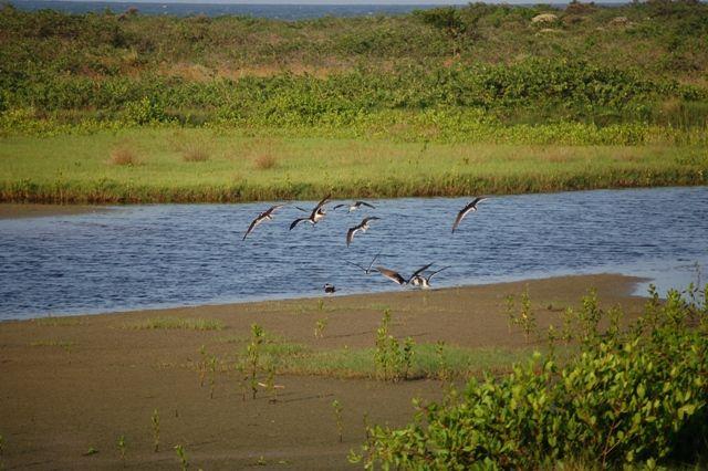 Zdjęcia: Ilha do Mel, Wyspa miodowa, Ptaki, BRAZYLIA