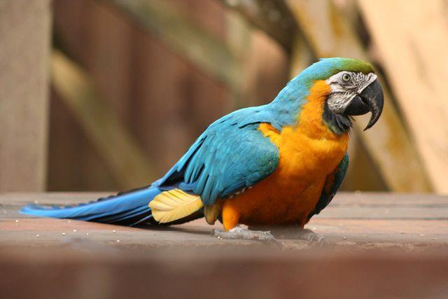 Zdj�cia: Amazonia, Amazonia, BRAZYLIA