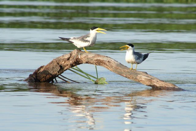 Zdjęcia: Pantanal, Pantanal, BRAZYLIA