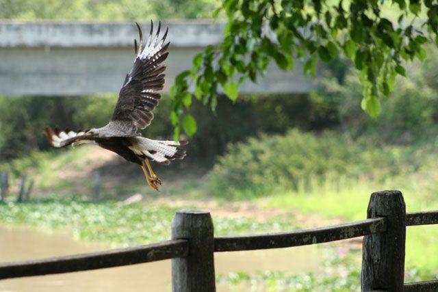 Zdjęcia: Pantanal, to ja już dziś lecę, pa ;-), BRAZYLIA