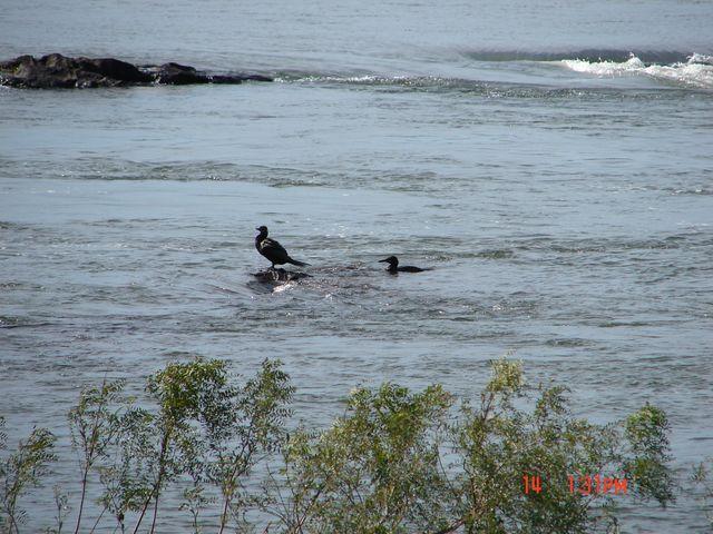 Zdjęcia: Foz de Iguazu, Foz de Iguazu, chwilowy spokój - początek potęgi wody, BRAZYLIA