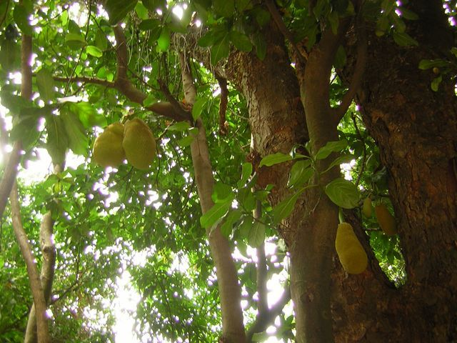 Zdjęcia: góra Corcovado, Rio de Janeiro, duriany, BRAZYLIA