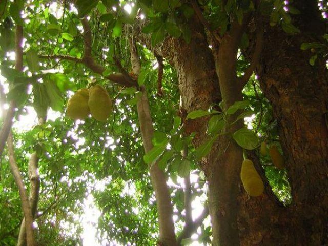 Zdjęcia: Corcovado, Rio de Janeiro, Duriany, BRAZYLIA
