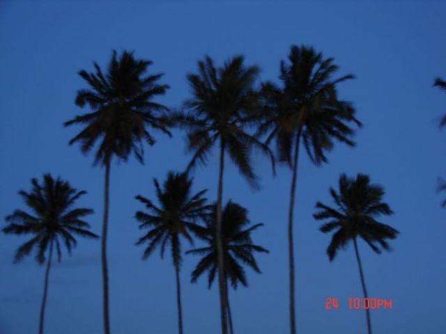Zdjęcia: Recife, Recife, palmy, BRAZYLIA