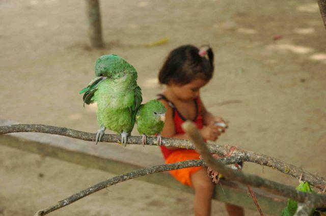 Zdjęcia: okolice Manaus, amazonia, dziewczynka z papużkami, BRAZYLIA