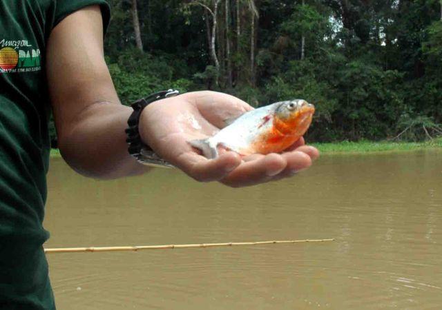 """Zdjęcia: amazonka, amazonka, żeby złowić piranię trzeba mieć """"rękę"""" :), BRAZYLIA"""