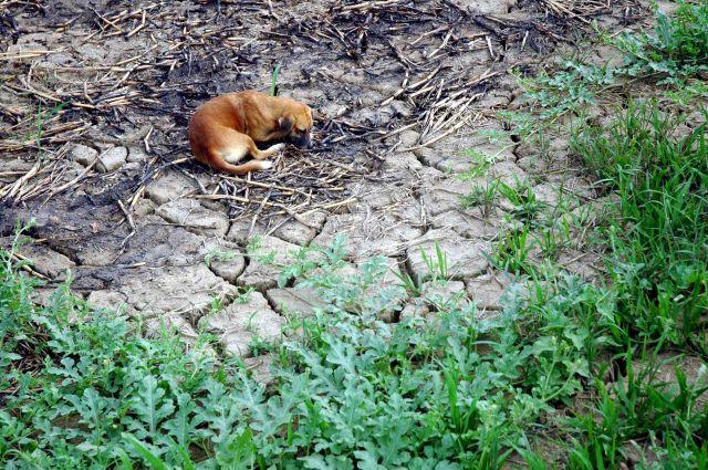 Zdjęcia: amazonia, amazonia, śmierć z pragnienia..., BRAZYLIA