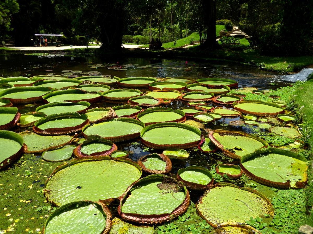 Zdjęcia: Rio de Janeiro, RJ, Park Jardim, BRAZYLIA