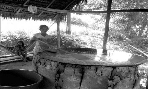 Zdjecie BRAZYLIA / Amazonia / Indiańska wioska Acajatuba / żyć dzięki... truciznie