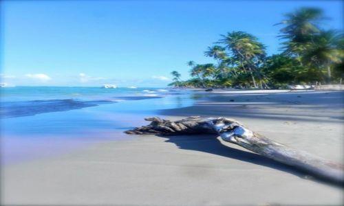 Zdjecie BRAZYLIA / Pernambuco / Praia Dos Carneiros / Paradise