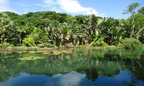 BRAZYLIA / Rio de Janeiro / Rio de Janeiro / Jardim Botanico (1)