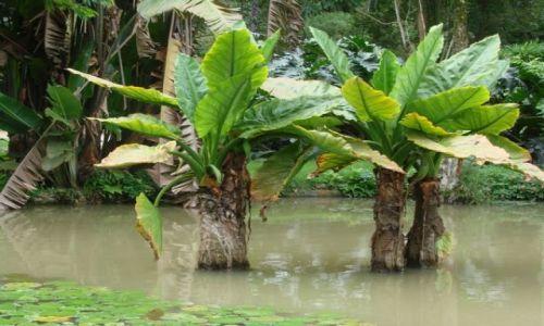 Zdjecie BRAZYLIA / Rio de Janeiro / Ogród botaniczny / Ogród botaniczn