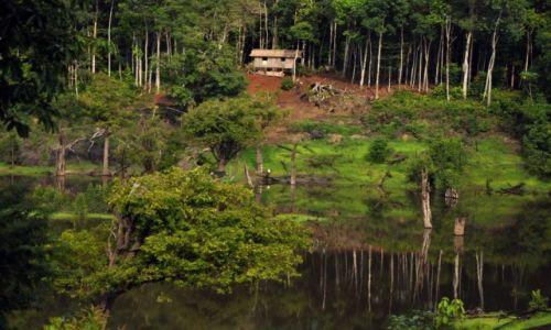 Zdjęcie BRAZYLIA / Amazonas / ... / Dżungla
