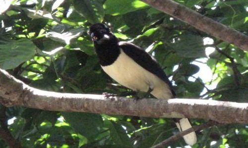 Zdjęcie BRAZYLIA / Iguasu / Iguasu / Urocze ptaszątko