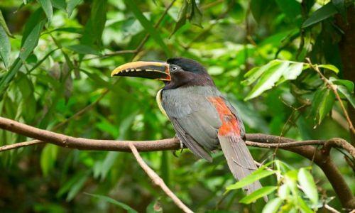 Zdjęcie BRAZYLIA / Foz do Iguazu / jw / Tukan