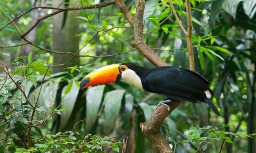 Zdjęcie BRAZYLIA / Foz do Iguazu / jw / Może będę leciał