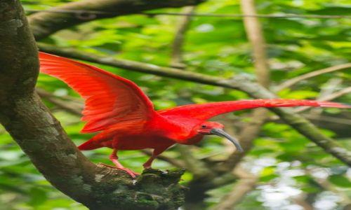 BRAZYLIA / Foz do Iguazu / Park Ptaków / Będę leciał