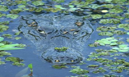 BRAZYLIA / brak / Pantanal / Pantanal