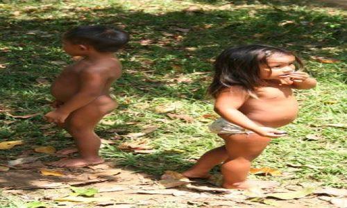 Zdjęcie BRAZYLIA / brak / Amazonia / Amazonia