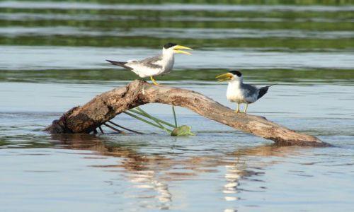 Zdjęcie BRAZYLIA / brak / Pantanal / Pantanal