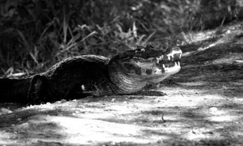 Zdjecie BRAZYLIA / brak / Pantanal / Smile ;-)