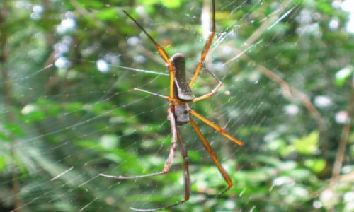 Zdjecie BRAZYLIA / Rio Tapajos / gdzieś w żungli / Tarantula