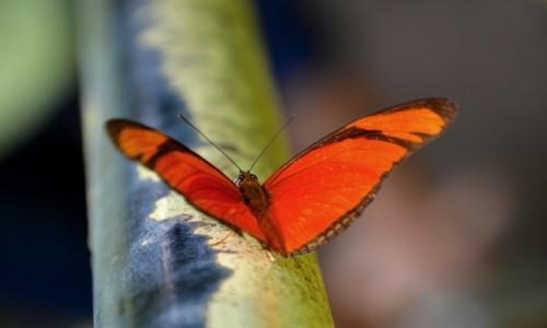 BRAZYLIA / Parana / Park Narodowy Iguazu / Motylek