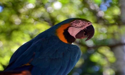 Zdjęcie BRAZYLIA / Parana / Park Narodowy Iguazu / Ptaszydło :)