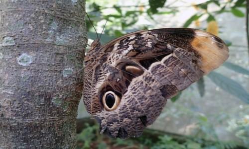 BRAZYLIA / Parana / Park Narodowy Iguazu / Niczym kameleon ;)