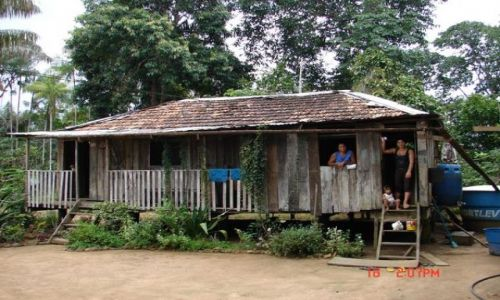 Zdjęcie BRAZYLIA / Amazonia / Amazonka / w tropikalnym lesie...