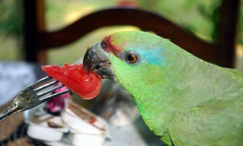 Zdjęcie BRAZYLIA / amazonia / manaus / dokarmiaj zwierzęta!