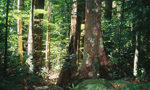 BRUNEI / Temburong / Bukitt Patoi / Dżungla